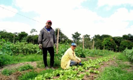 Agricultores de Santa Izabel devem faturar R$ 40 milhões em 2020
