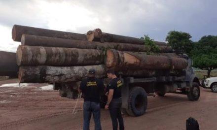 Polícia Civil apreende madeira transportada ilegalmente em Tailândia e Moju