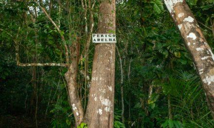 Própolis vermelho de Alagoas: em meio a destinos turísticos, abelhas movimentam pesquisas sobre dores e bactérias