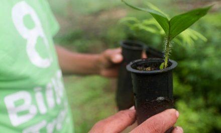 Sedap garante transporte de 30 mil mudas de citrus para 700 produtores