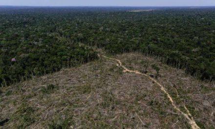 Pará reforça fiscalização contra desmatamento durante pandemia da covid-19