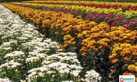 Um dia em Holambra, a capital brasileira das flores