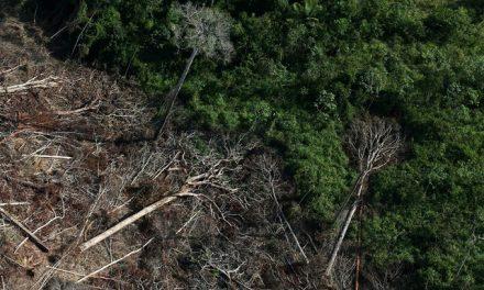 Desmatamento na Amazônia tem tendência de alta no ano; veja 10 motivos de alerta
