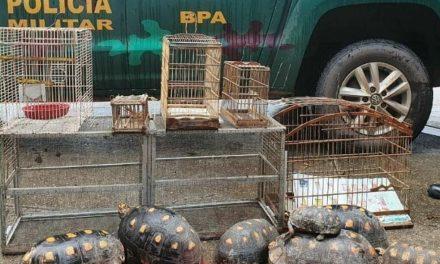 BPA apreende 13 animais silvestres dentro de imóvel em Belém