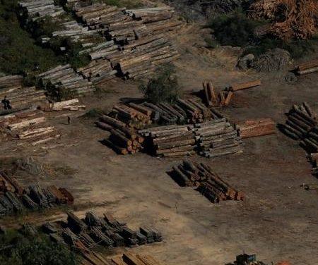 MPF processa 2.262 pessoas e empresas por desmatamento na Amazônia em maio