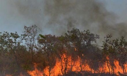 Em 2019, um terço da perda de florestas virgens no mundo ocorreu no Brasil