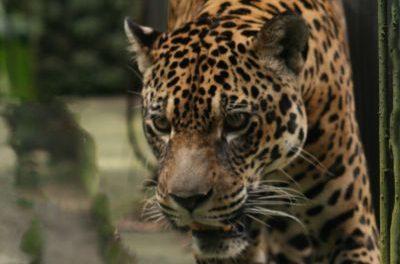 Pará terá primeiro Centro Estadual de Triagem e Reabilitação de Animais Silvestres
