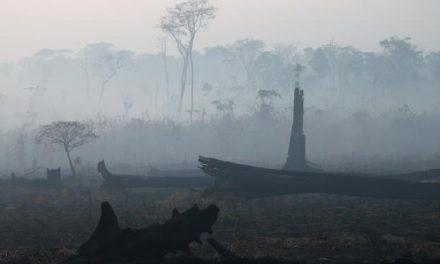 Pesquisadores alertam para risco de queimadas em escala ainda maior no Pará