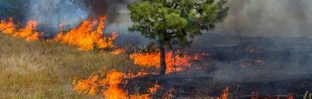Prefeitura inicia campanha contra queimadas em Barcarena