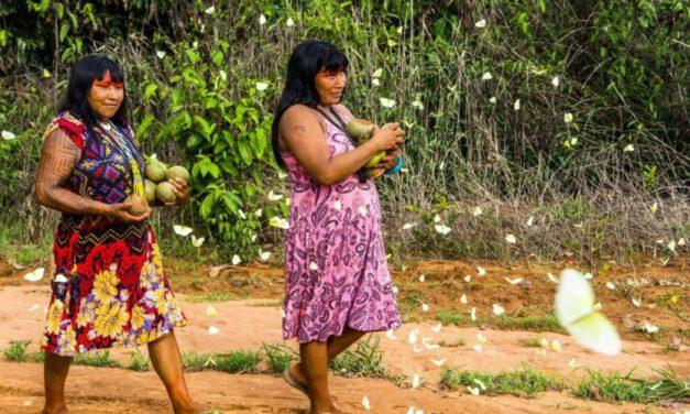 Covid-19 já atinge quase um terço das etnias indígenas, diz comitê