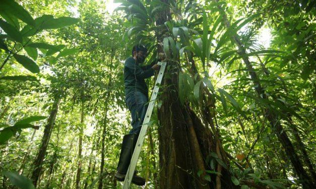 Parque do Utinga cataloga dezenas de espécies de plantas durante a pandemia