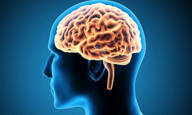 Ameba 'comedora de cérebro': caso de infecção alerta os EUA