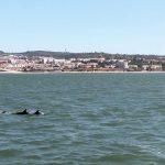 Sem cruzeiros, Golfinhos estão de volta ao rio Tejo em Lisboa