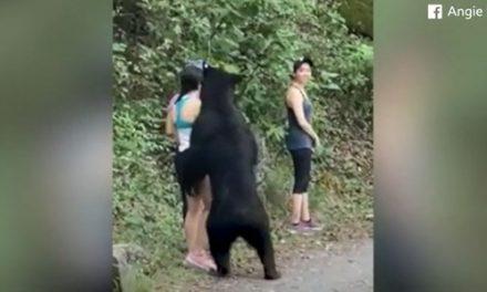 Mulher faz selfie com urso ao ser 'abordada' por animal em parque