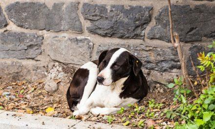 Milhares de animais de estimação são abandonados nas estradas da França durante o verão