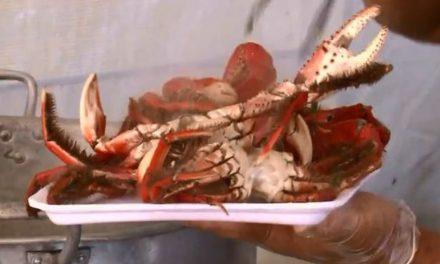 Preço do caranguejo registra aumento de quase 8% em Belém