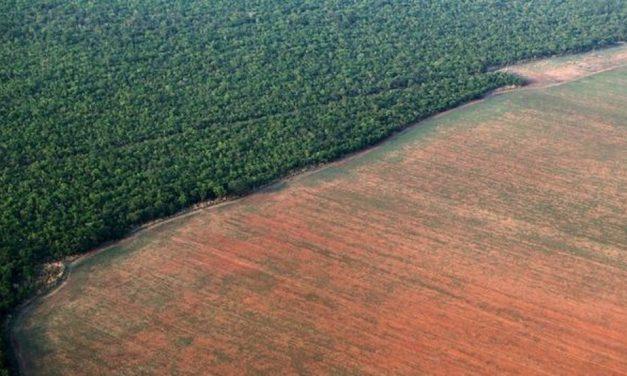 Atuação da Força Nacional na terra indígena Apyterewa é prorrogada no Pará