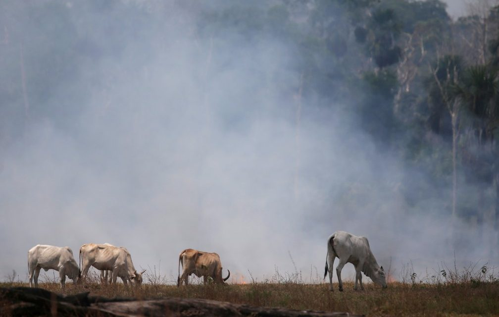 Incêndios na Amazônia aumentaram 28% em julho em comparação ao ano passado