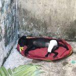 Cadela quebra o osso após ser brutalmente arremessada de carro e homem que a socorreu faz apelo para custear cirurgia