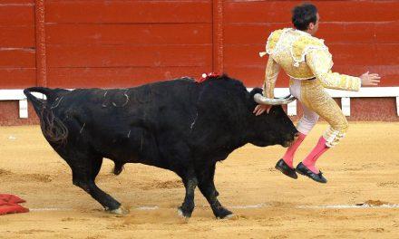Toureiro leva chifrada em evento com 5 mil pessoas na Espanha