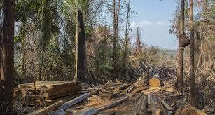 Fiscalizações fazem diminuir 38% do desmatamento no Pará