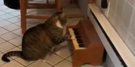 Gatinha toca piano para avisar que está com fome e conquista a internet