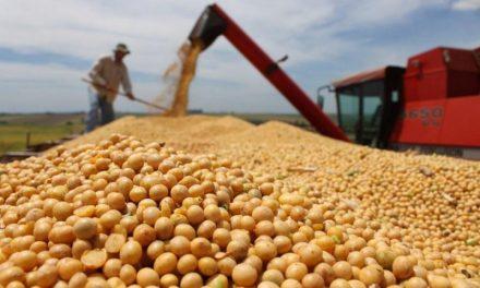 Soja é o principal produto agro exportado pelo Pará