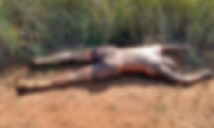 Dois corpos são encontrados em estrada próximo à Vila Soledade