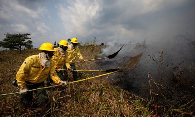 Número de focos de queimadas em agosto no AM é o maior para um único mês desde 1998