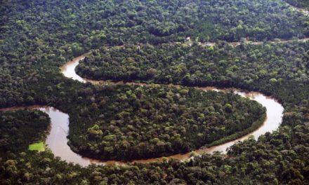 Governo incentiva desenvolvimento econômico da Amazônia com preservação da floresta em pé