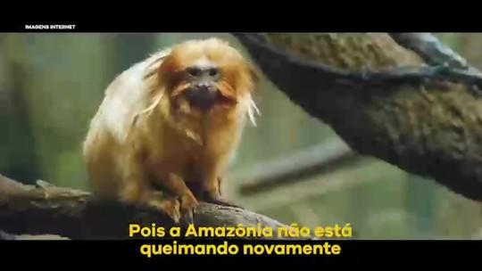 Mico-leão-dourado na Amazônia? Salles e Mourão cometem gafe para rebater críticas