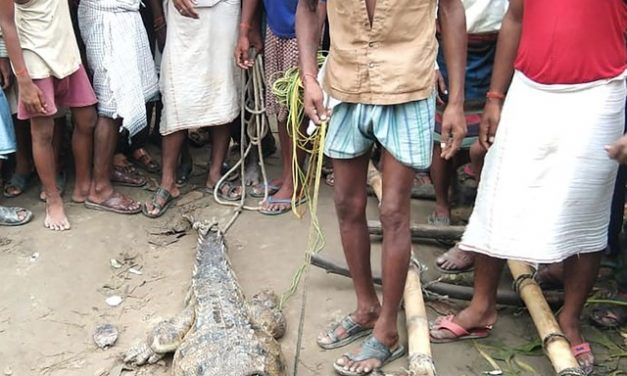 Moradores de aldeia na Índia fazem crocodilo refém durante protesto