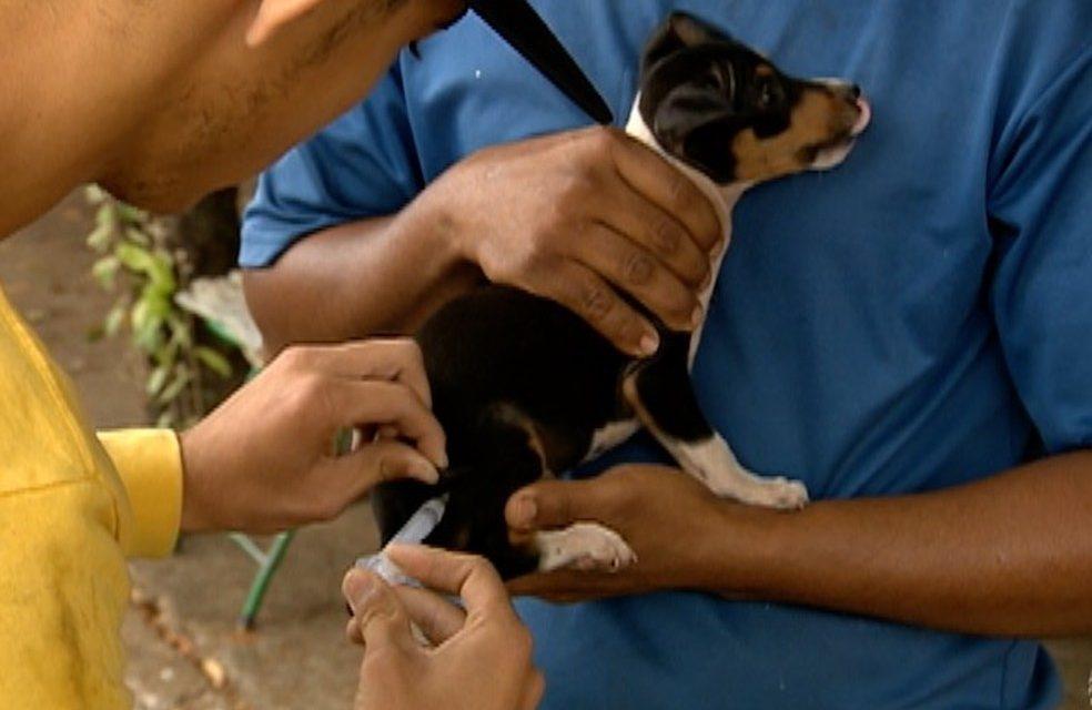 Campanha de vacinação contra a raiva começou na segunda-feira (14)