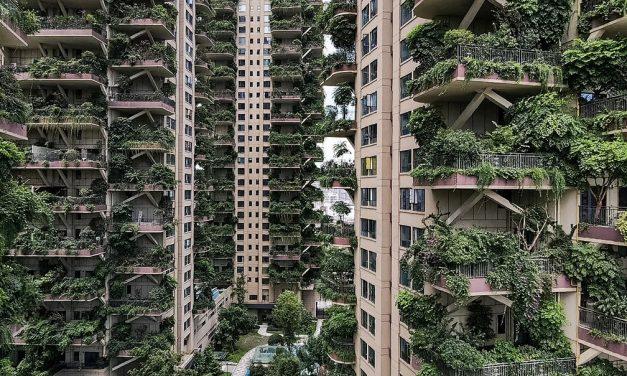 Plantas 'invadem' prédios na China e moradores abandonam imóveis