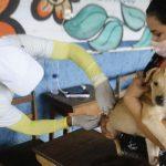 Tailândia: vacinação antirrábica de cães e gatos é em 29 de setembro