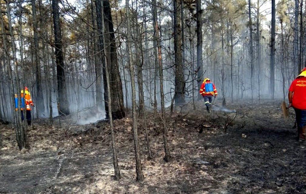 Incêndios florestais em SP mais do que dobram em 2020
