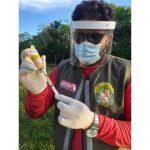 Vacinação em rebanhos de bovídeos é feita no arquipélago do Marajó