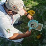 Adepará aproxima o Pará do status de área erradicada da mosca-da-carambola