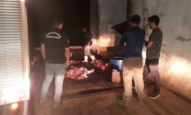Operação apreende bovinos destinados ao abate irregular no Pará