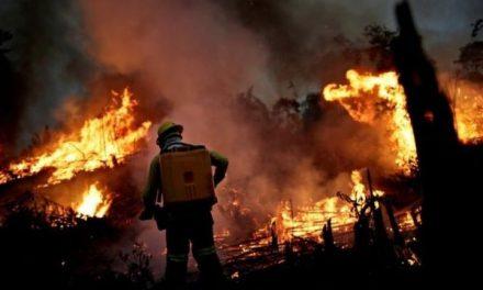 Força-tarefa da Amazônia cobra R$ 893 milhões de desmatadores da Amazônia Legal