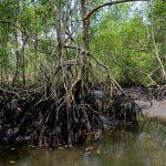 Conama derruba resoluções que restringiam o desmatamento em manguezais e restingas