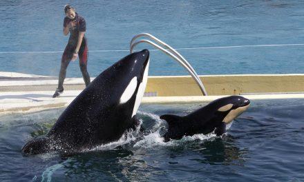 França vai proibir os animais selvagens em circos itinerantes