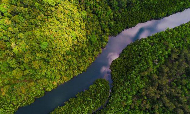 TRF acata recurso, e decisão que tirou proteção a manguezais volta a valer
