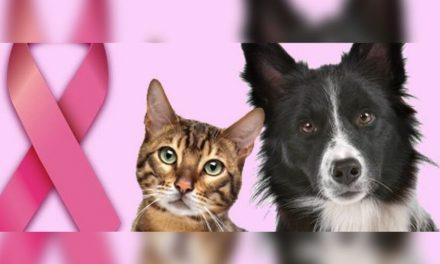 Outubro Rosa Pet: câncer de mama também atinge animais?