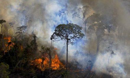 Governo prorroga até abril de 2021 apoio da Força Nacional ao ICMBio na Amazônia