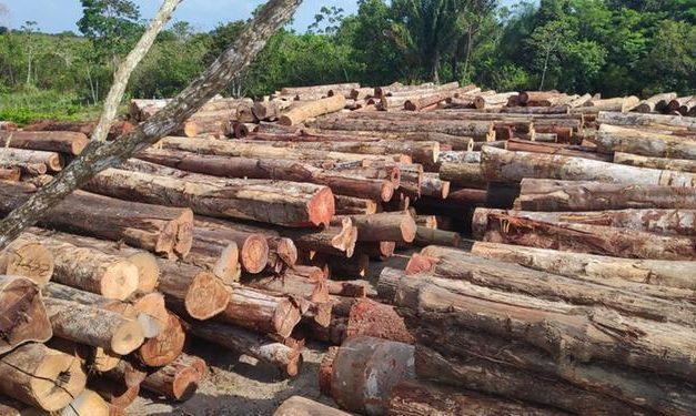 Operação realiza a maior apreensão de madeira ilegal do ano