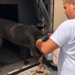 Pará tem o primeiro caso de prisão em flagrante por maus tratos a animais