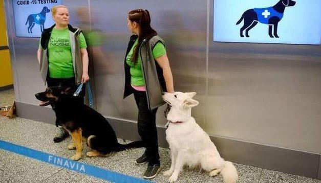 Aeroporto da Finlândia investe em cães para 'farejar' a Covid-19