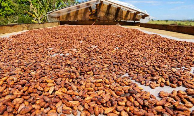 Investimentos em agricultura colocam o Pará na liderança nacional da produção de açaí e dendê