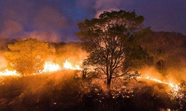Amazônia já tem mais queimadas em 2020 do que em todo o ano passado